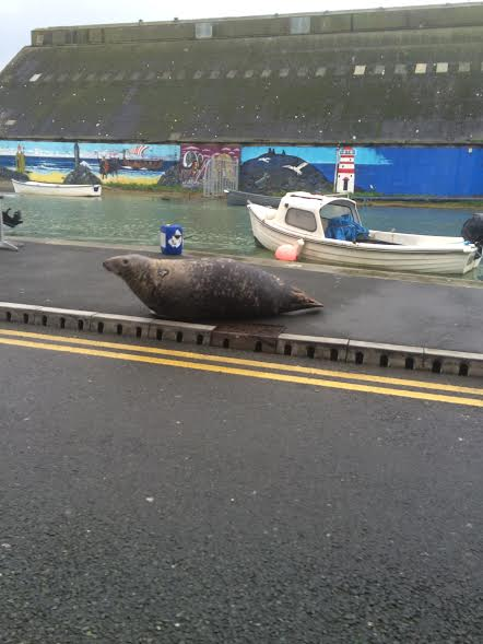 Sammy the Seal Wicklow