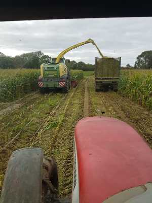 Maize Harvesting in Ireland